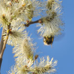 Hommel 23 april 2011 01