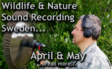 5 days wildlife sound recording field trip